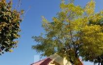 Vilă de închiriat, 200 mp, Nicolina